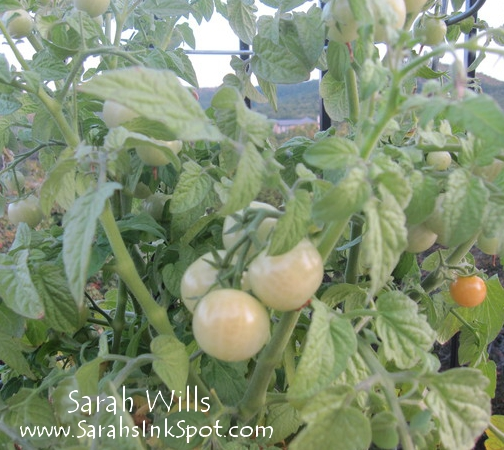fall-wreath-tomatoes