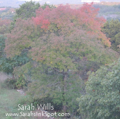 fall-wreath-tree